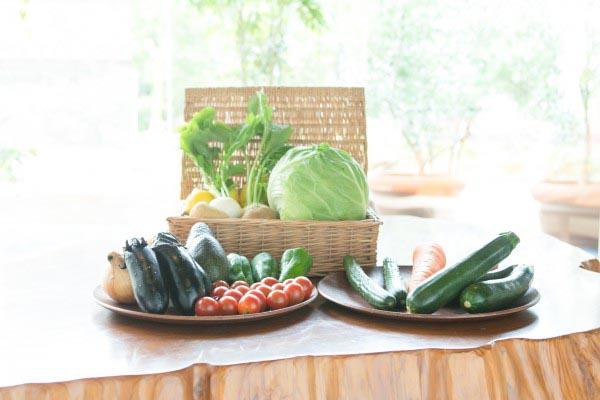 ネオダイニング 都筑野菜
